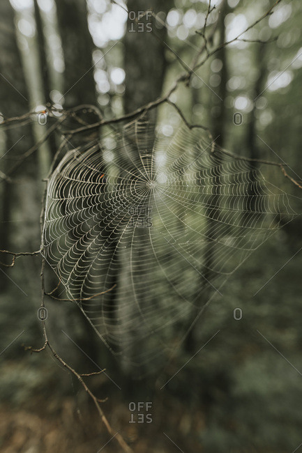 Spider web at a twig