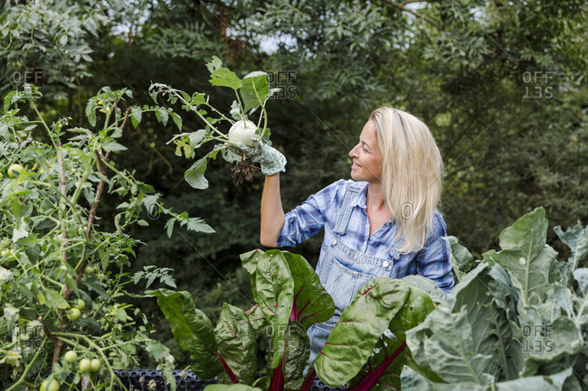 Blond smiling woman harvesting mangold