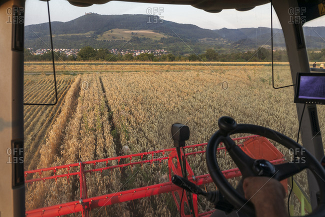 Organic farming- wheat field- harvest- combine harvester in the evening