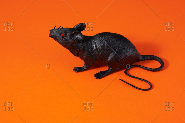 Rat on orange background