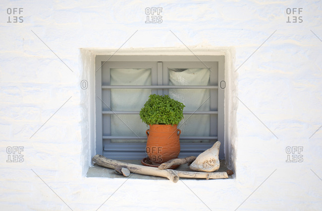 Natural decorations and potted plant sitting on window shelf