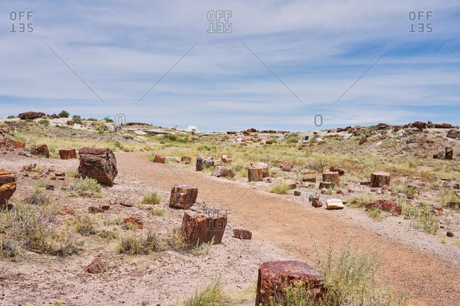 Petrified wood in the Petrified Forest National Park, Arizona