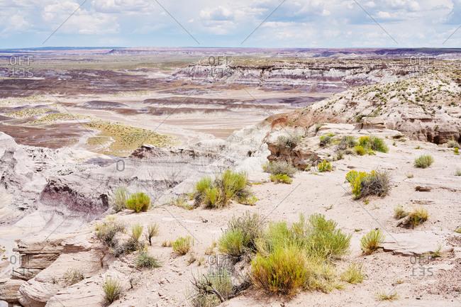 Beautiful landscape with desert plants at Petrified Forest National Park, Arizona