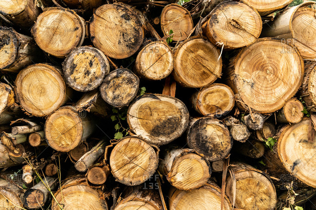 Abstract background of stacked woodpile from cut logs