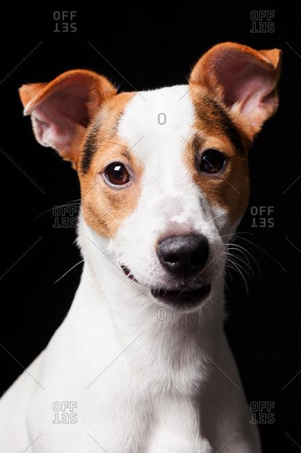 Amazing dog staring at camera