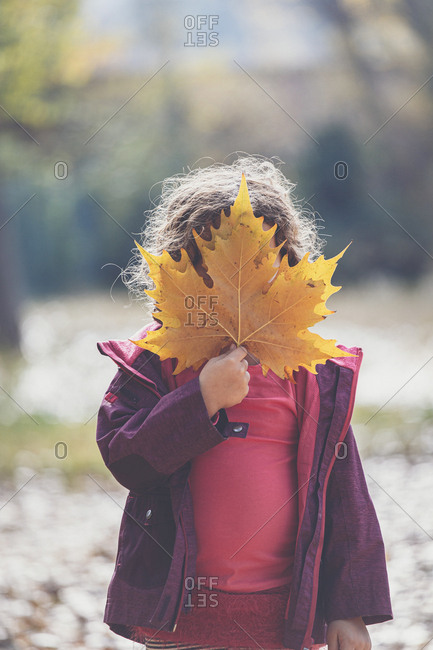 Little girl in casual outfit hiding face behind yellow maple leaves while standing on sunny autumn day in park