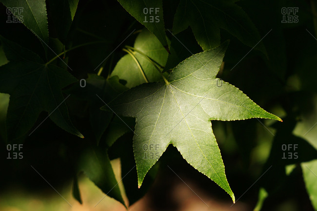 close up of fresh green foliage