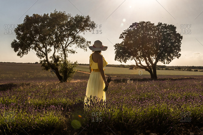 Back view of romantic woman in hat and yellow dress enjoying picturesque view of lavender field on sunny day