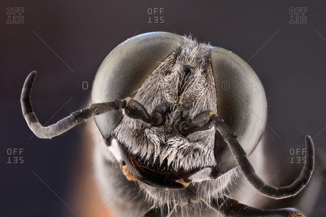 Closeup of magnified grey head of flying insect with round convex green eyes