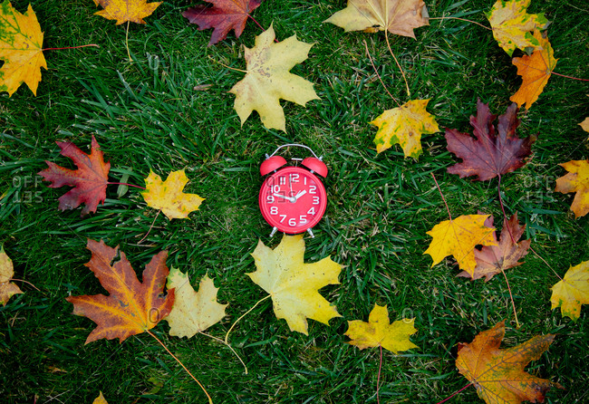 red alarm clock and maple leaves on green grass