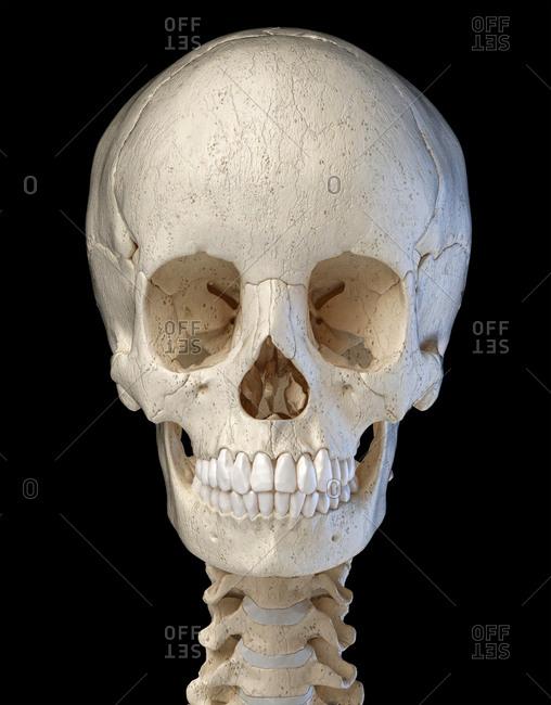 Human skull 3d illustration. Front view on black background.