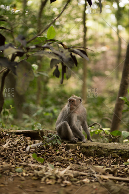 Monkey sitting on tree trunk on forest floor
