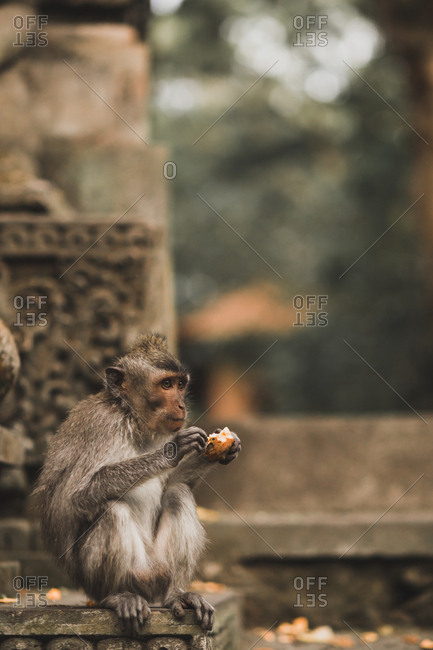 Monkey eating fruit while sitting in temple
