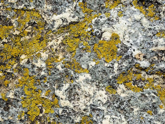 Yellow lichen on rock