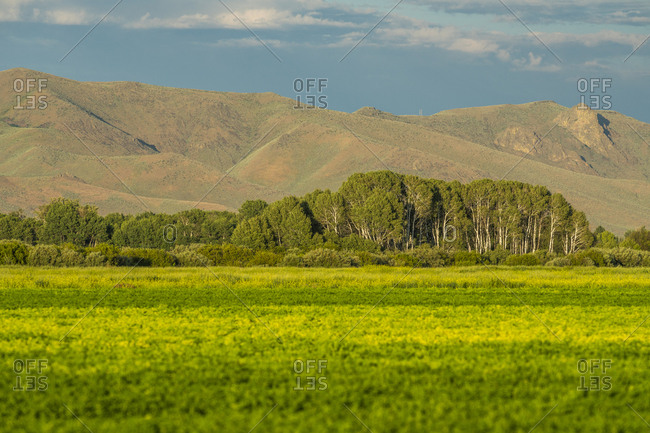 Field by trees and hills in Picabo, Idaho, USA