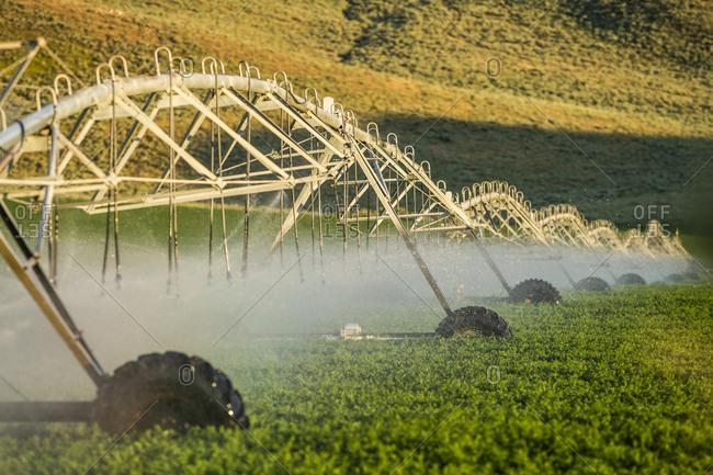 Irrigation system spraying crop field