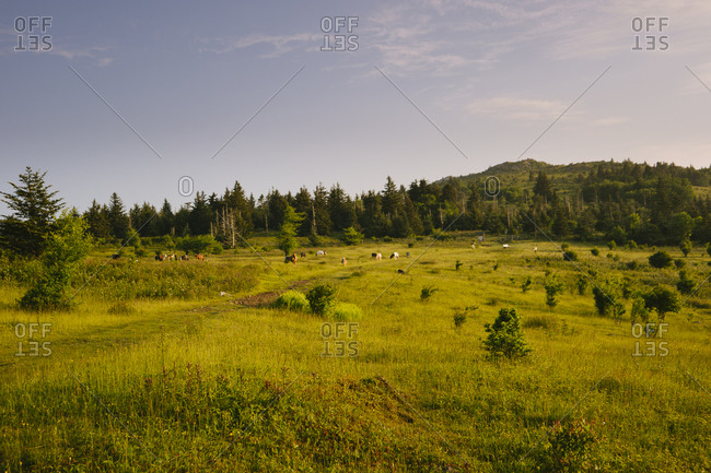 Field by forest in Mount Rogers National Recreation Area, USA