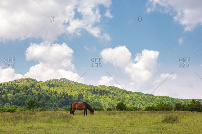 Wild pony grazing in Mount Rogers National Recreation Area, USA