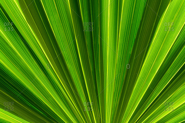 Close-up of green frond - Offset