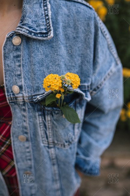 Yellow flowers inside a pocket of a denim jacket