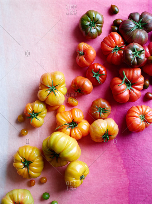 Colorful heirloom tomatoes on a pink gradient background