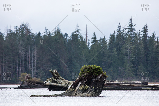 Fallen trees in a lake