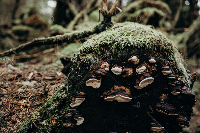 Fallen trees in a forest growing fungus