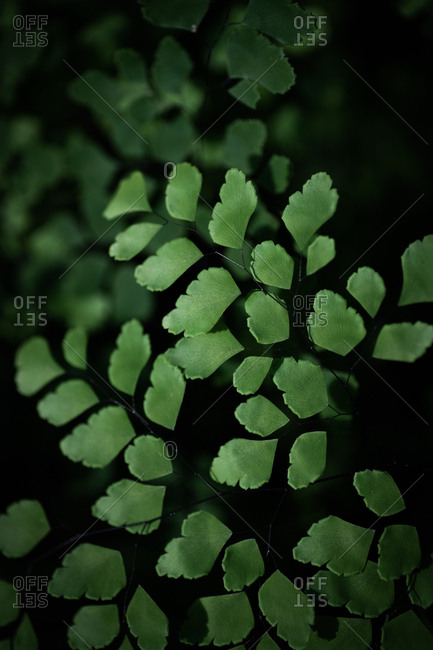 Close up of beautiful green leafy shrub