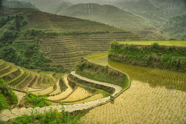 Terraced Rice terraces, Longji, Guilin, China