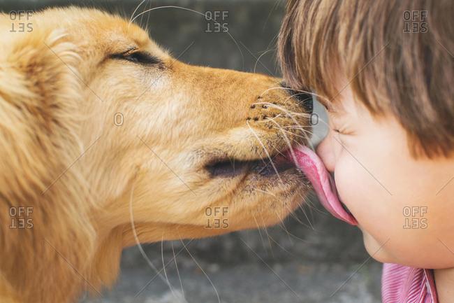 Dog licking a boy's face