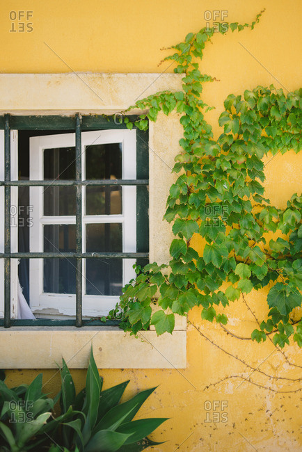 Vines growing by window on side of yellow house