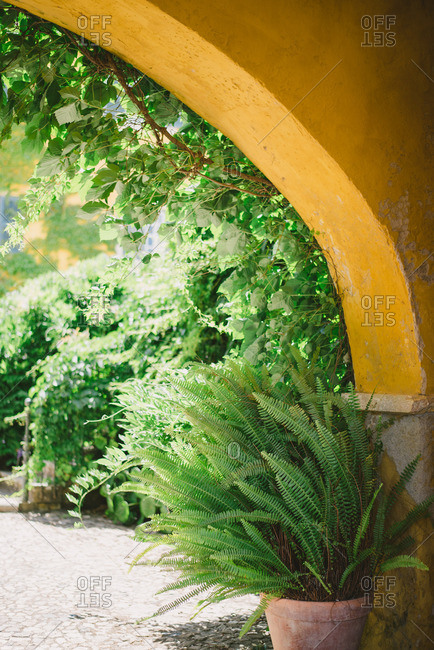 Potted plant under yellow arch