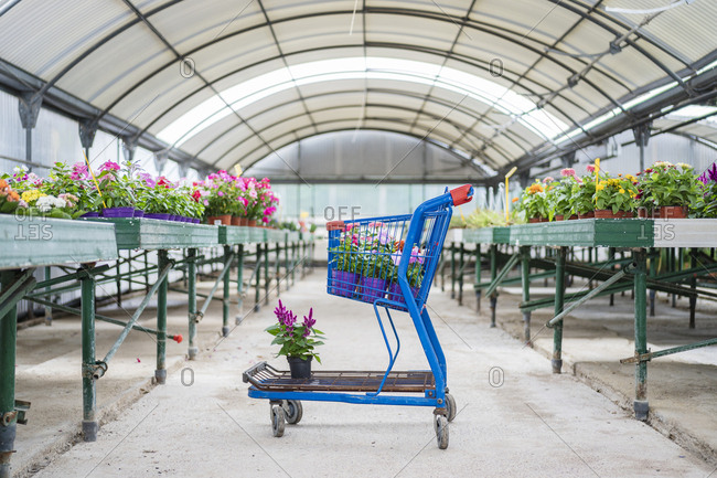 Shopping cart with plants and flowers in plant nursery
