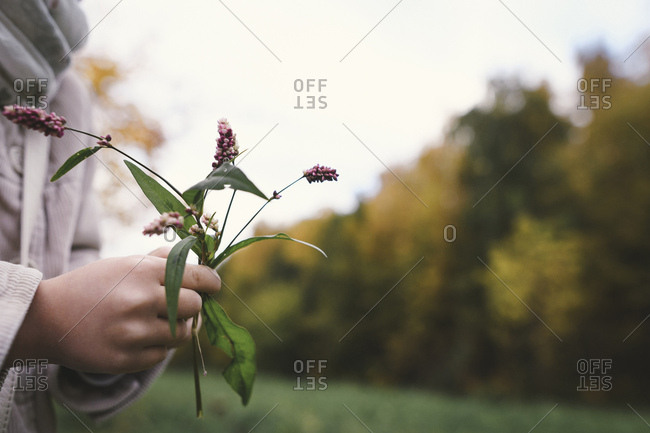 Girl's hands holding picked flowers in autumn- close-up