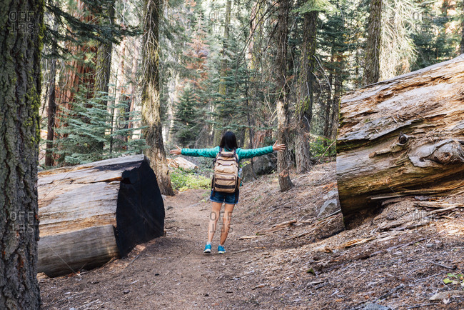 Woman with backpack hiking among the giant trees in the forest in Sequoia National Park- California- USA