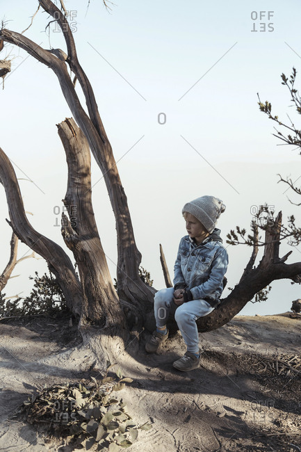 Young boy sitting on a tree at the edge of volcano Ijen- Java- Indonesia