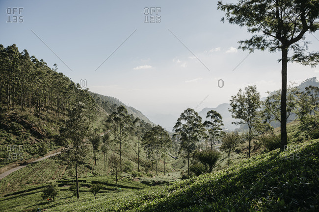 Scenic view of trees and plants growing on agricultural landscape in Sri Lanka against sky