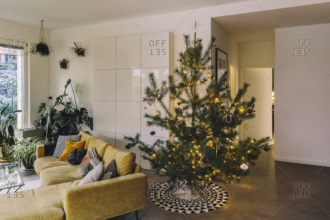 Decorated pine Christmas tree in living room