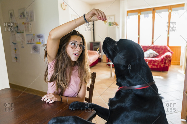 Girl playing with dog at table at home