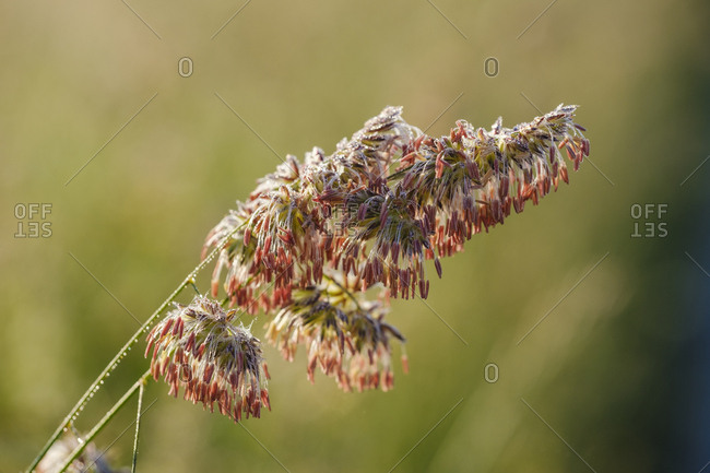 Close-up of flowering plant in forest during sunny day