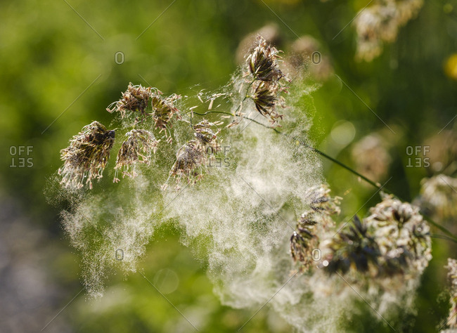 Close-up of spider web on dry plant in forest