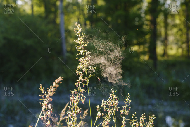 Close-up of spider web on flowering plant in forest