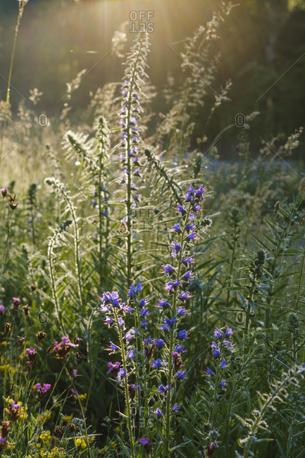 Flowering plants growing in forest on sunny day