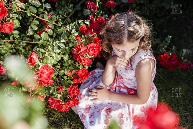 Girl sitting beside red rosebush on a meadow