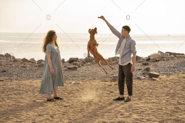 Young couple with dog at the beach- dog jumping