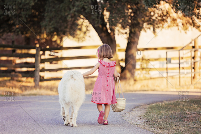 Back view of little girl walking beside big white dog on country road