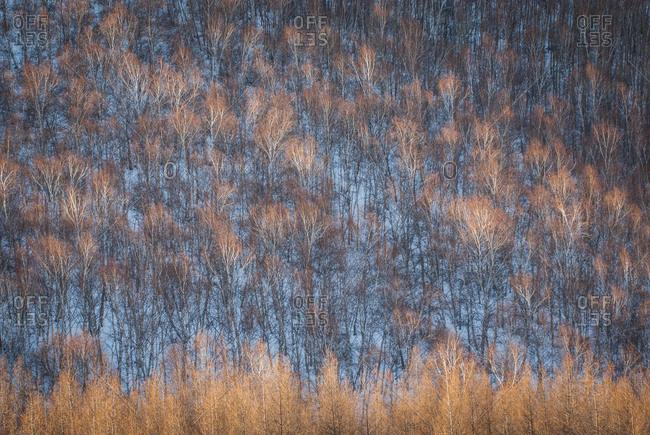 Bashang winter scenery