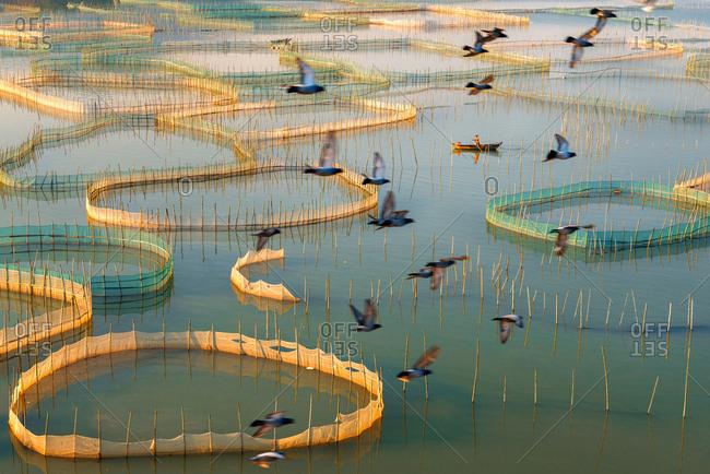 Seine bird fishing boat - Offset