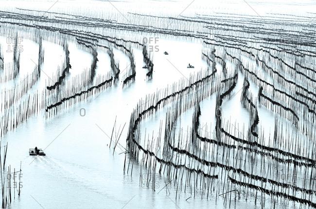 Laver plantation in Fujian Province
