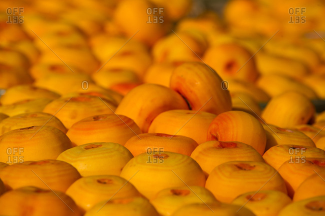Peeled persimmons drying outside